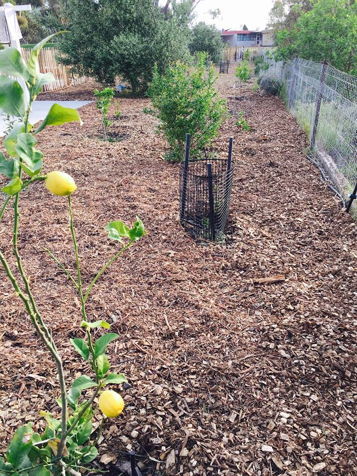 Citrus orchard - starting out