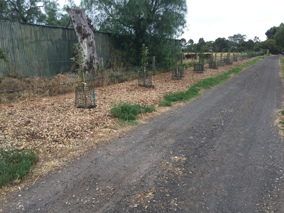 Driveway mulched 1