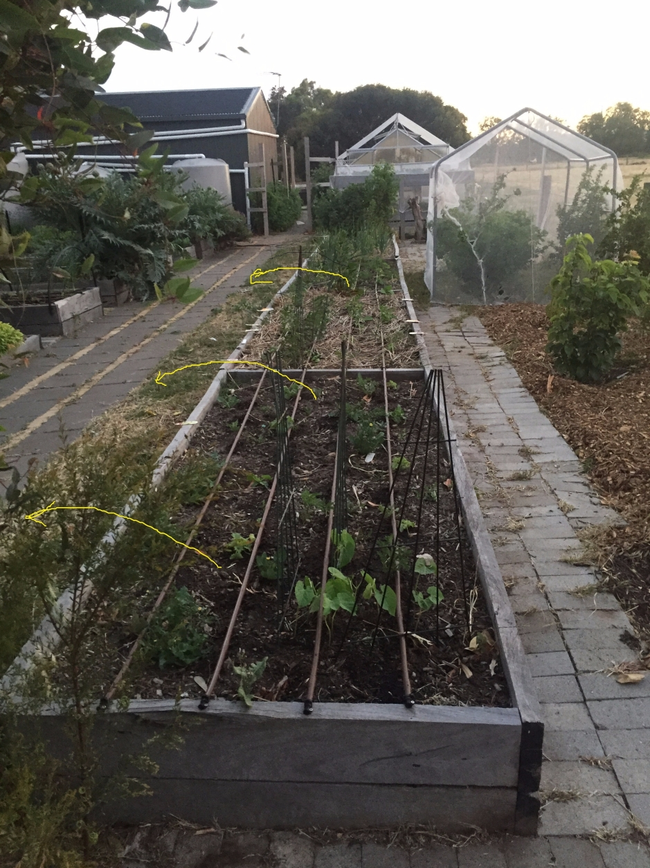 Veg garden - long box for relocation - lines