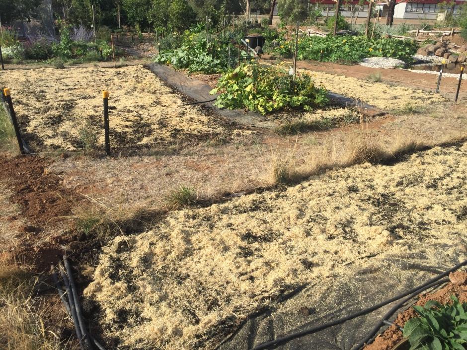 Nodig - lucerne mulch