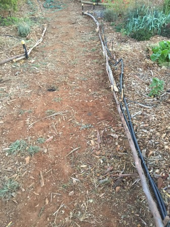Path - edging 2