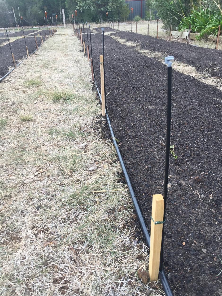 Veg - homemade stakes