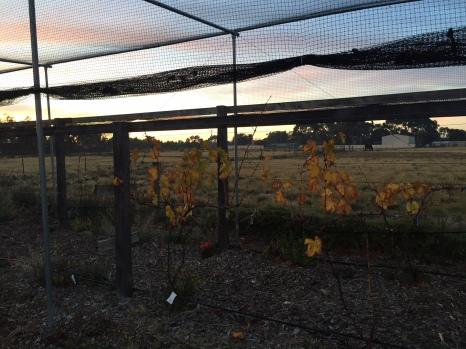 fall - nets 2
