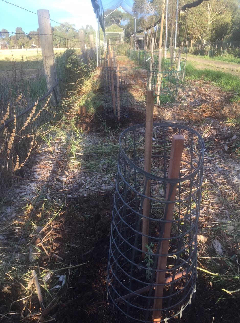 Nitro - planted