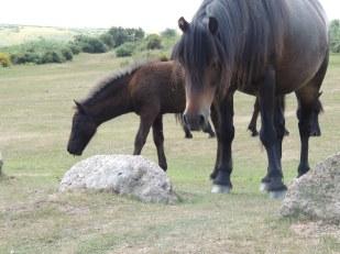 Dart - ponies 1