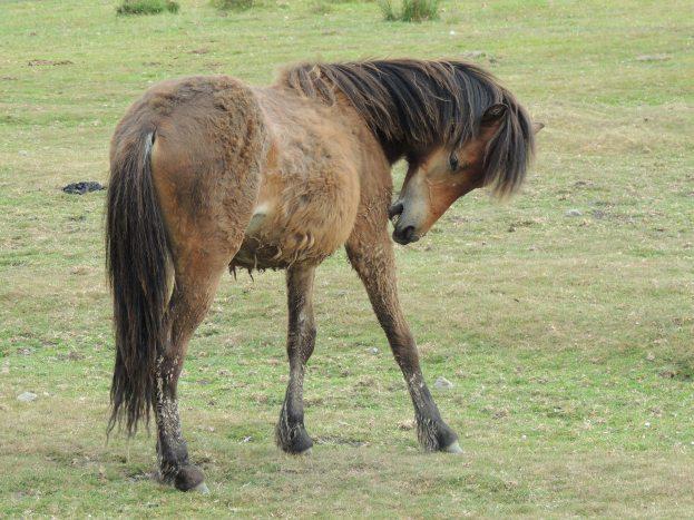 Dart - ponies 6