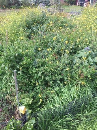 Grind - forest vegetables2