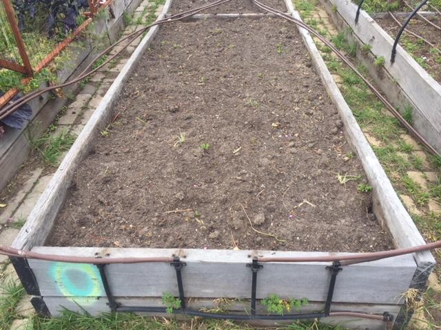 Asparagus - irrigation